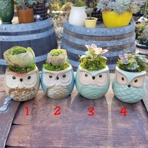 Miniature owl planter with succulent flowers